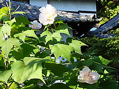 20141003_154357