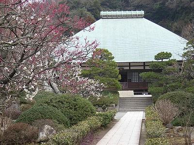 梅の浄妙寺