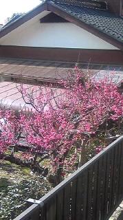 春待ちかねて