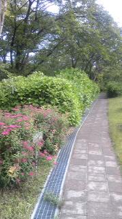 紫陽花の散歩道
