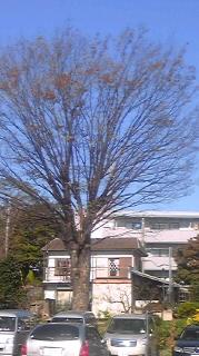 駐車場の木