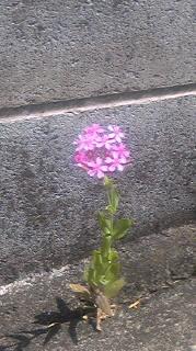 石に花飾り